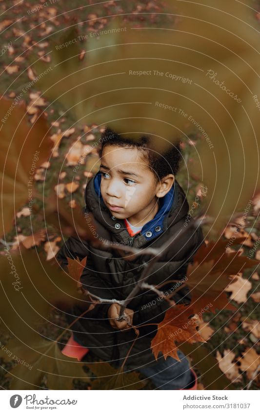 Black boy with autumn twig Boy (child) Branch Autumn Park Leaf Looking away Child African-American Nature Seasons Delicate Fragile Joy Leisure and hobbies