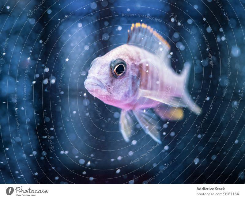Exotic fish in aquarium Fish Aquarium Swimming Tropical Water Natural marine Transparent Animal Aquatic Clean Living thing Amazing Beautiful magnificent Life