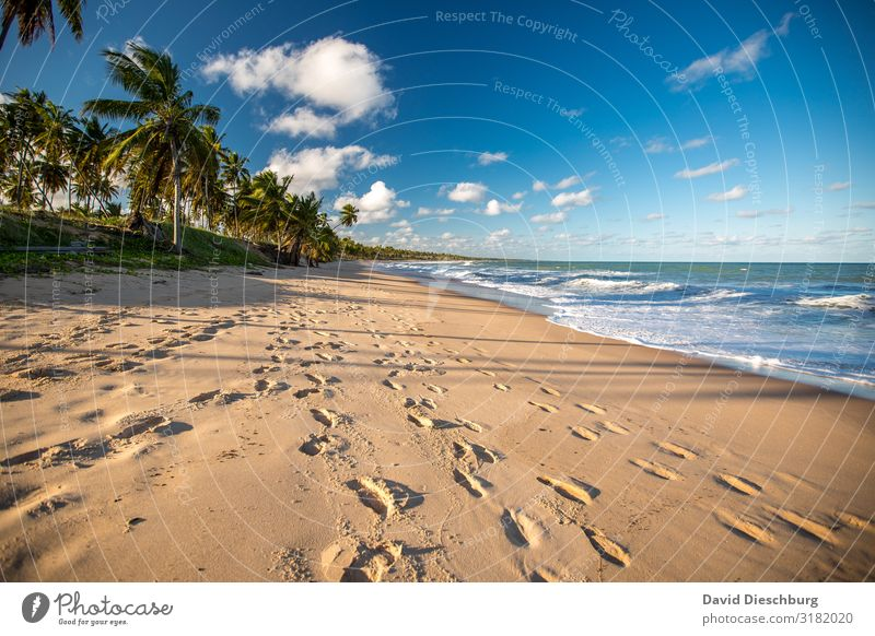 Beach in Bahia Vacation & Travel Cruise Summer vacation Sunbathing Nature Landscape Plant Animal Sky Clouds Spring Beautiful weather Waves Coast Ocean Island