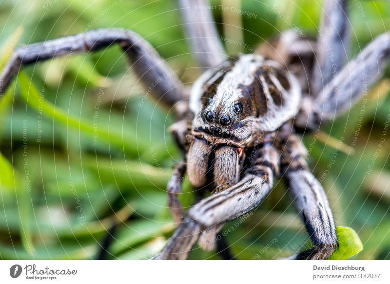 banana spider Vacation & Travel Nature Beautiful weather Garden Park Meadow Virgin forest Wild animal Spider Animal face 1 Fear of death Dangerous Logistics