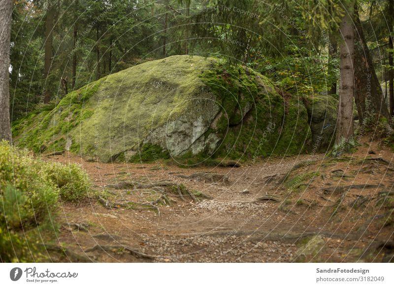 Huge rocks in the forest Vacation & Travel Trip Hiking Nature Landscape Earth Park Hill Rock Discover Walking Joie de vivre (Vitality) luisenburg Labyrinth