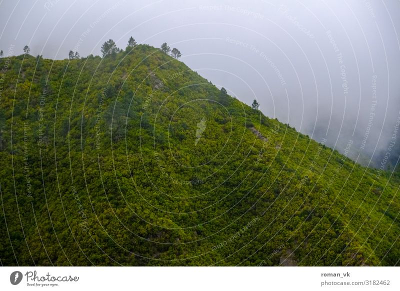Fog Mountain on Madeira Environment Nature Landscape Plant Elements Climate Bad weather Wind Foliage plant Forest Virgin forest Hill Threat Fresh Gloomy Green