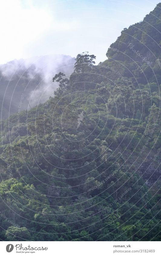 Madeira's forests Environment Nature Landscape Plant Climate Climate change Weather Beautiful weather Fog Tree Forest Fresh Gigantic Infinity Contentment jungle