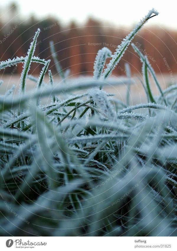 morning frost Grass Winter Autumn Dew Frost Close-up Graffiti