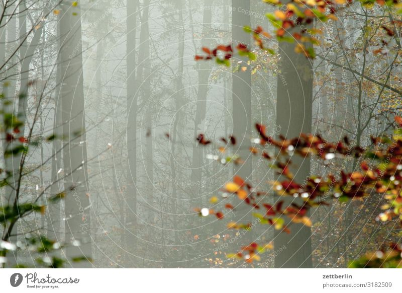 Text space in the autumn forest Haze Autumn Autumn leaves Autumnal colours Autumn program Landscape Leaf Deserted Morning Fog Perspective Far-off places Sun