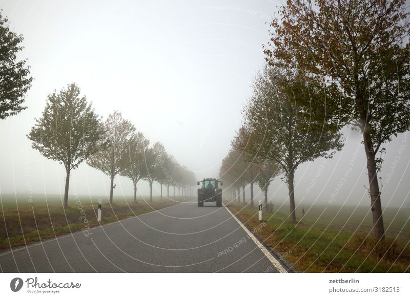 Country road with tractor Haze Direct Right ahead Autumn Autumnal colours Landscape Deserted Morning Fog Perspective Far-off places Sun Street Copy Space