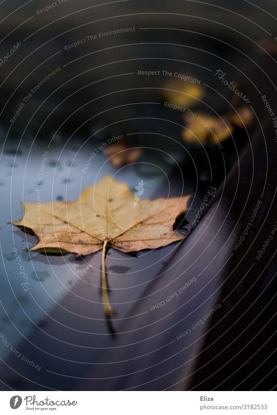 Autumn on car Leaf Maple leaf Blue Windscreen Autumnal Autumn leaves Rain Drops of water Colour photo Exterior shot Deserted Copy Space top Copy Space bottom