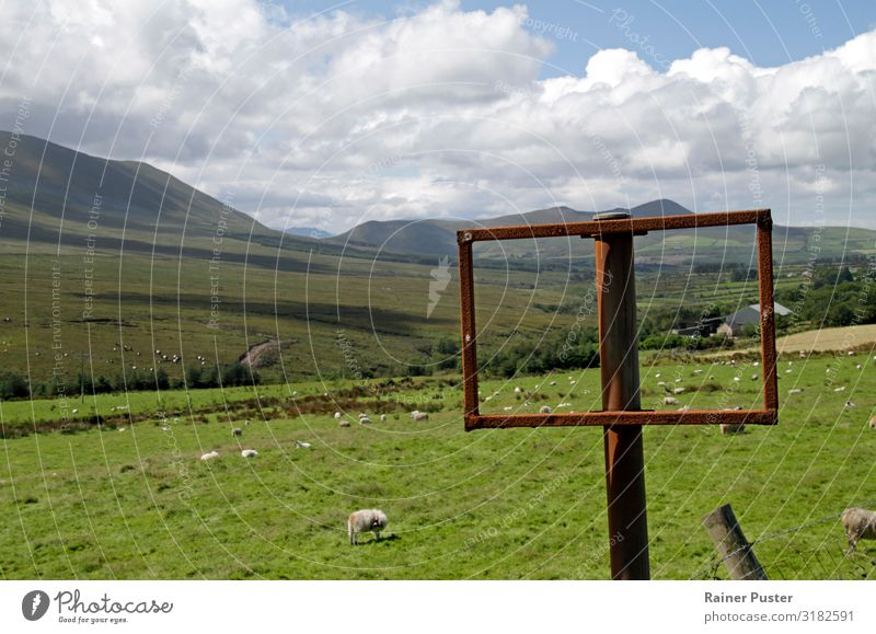 Green spaces: Travelling through Ireland Far-off places Summer vacation Hiking Environment Grass Meadow Hill Deserted Lanes & trails Sheep Group of animals Herd