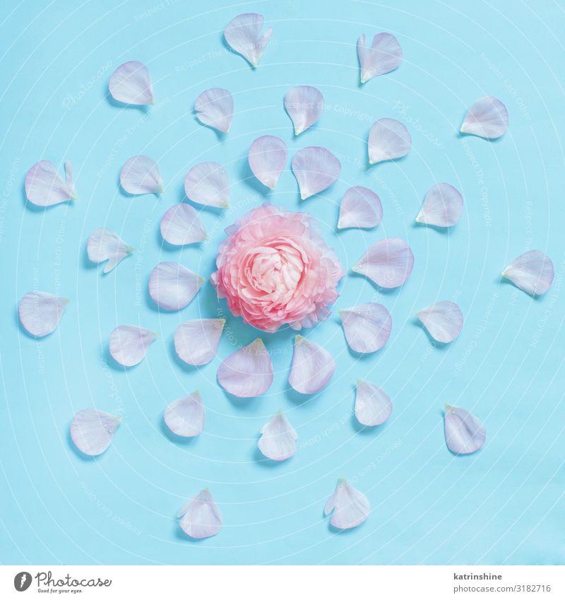 Flowers on a light blue background Design Decoration Wedding Woman Adults Mother Rose Above Creativity romantic Light blue flat lay Conceptual design decor