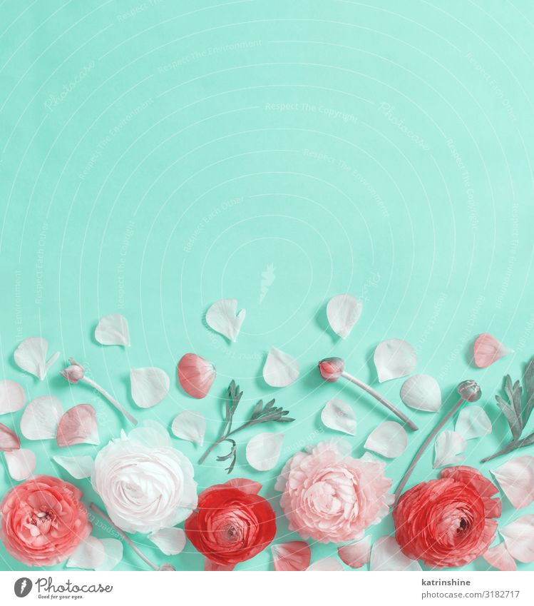 Flowers on a light green background Design Decoration Wedding Woman Adults Mother Rose Above Creativity romantic Light green Mint flat lay Copy Space