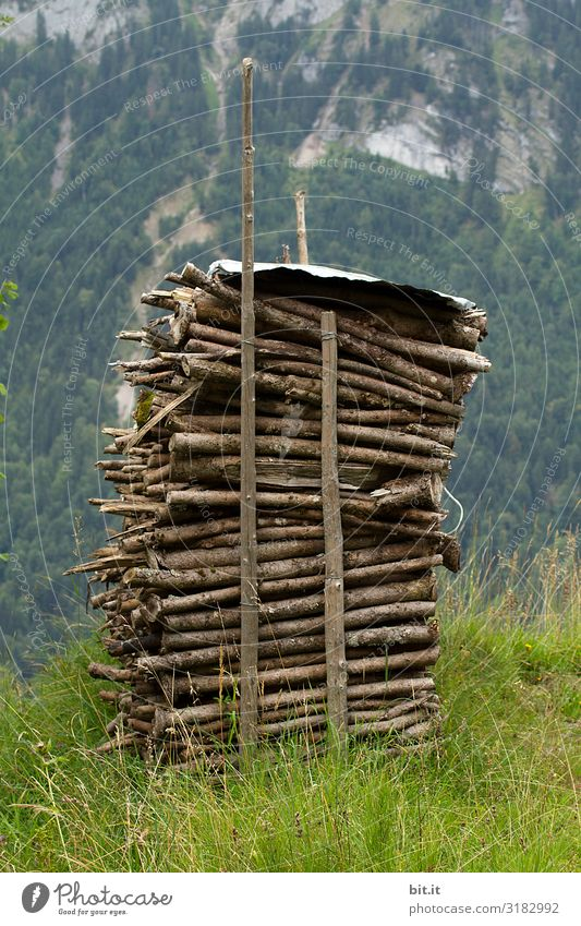 stack of wood Environment Nature Landscape Alps Mountain Green Wood Stack of wood Heat Heating Warm period Heating by stove Fire Firewood Fuel Colour photo