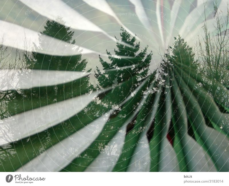 Nature Christmas & Advent Plant Tree Forest Environment Art Wind Climate Painting and drawing (object) Christmas tree Gale Fir tree Rotate Whimsical Work of art