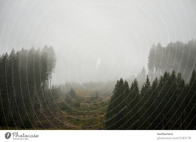 Trash 2019! | cold, gloomy morning Landscape Elements Sky Fog Ice Frost Forest Black Forest Cold Moody Beginning Horizon Climate Nature Far-off places