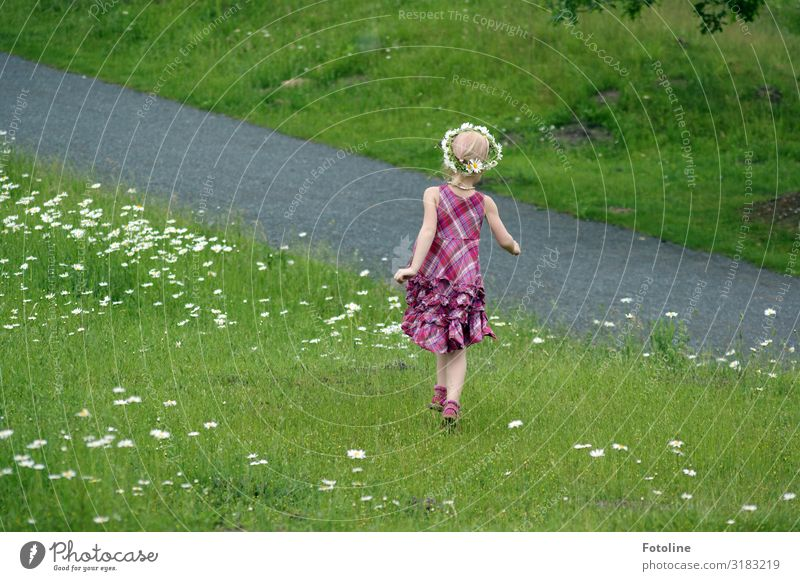 Nature Summer Plant Green White Landscape Flower Warmth Environment Natural Feminine Meadow Happy Grass Garden Park