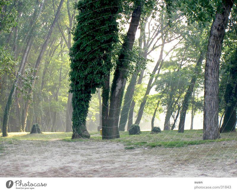 Green Calm Forest Moody Fog