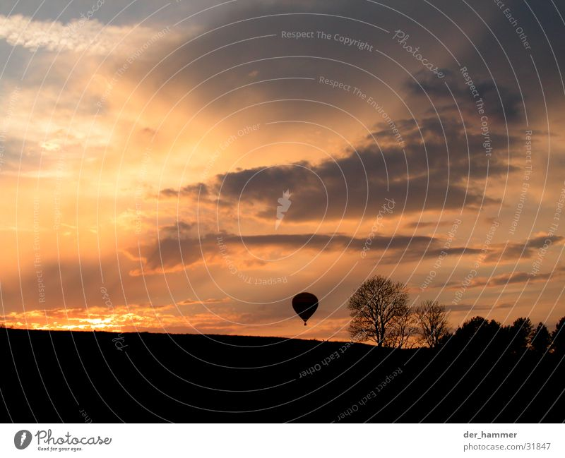Sky Tree Sun Clouds Bushes Hot Air Balloon Dusk