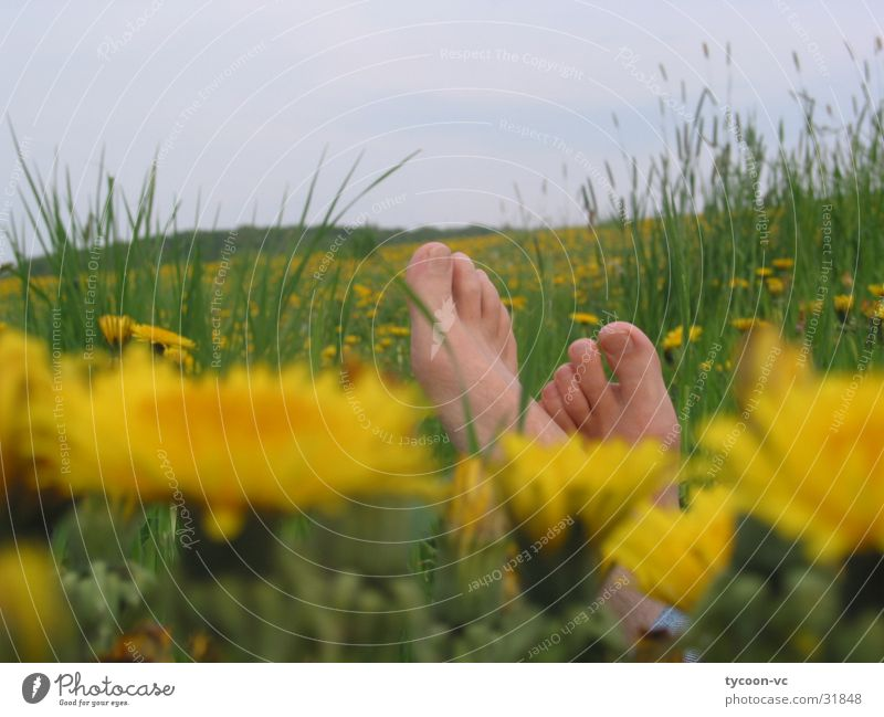 dandelion Flower Meadow Break Toes Dandelion Calm Sleep Relaxation Feet Lie Barefoot