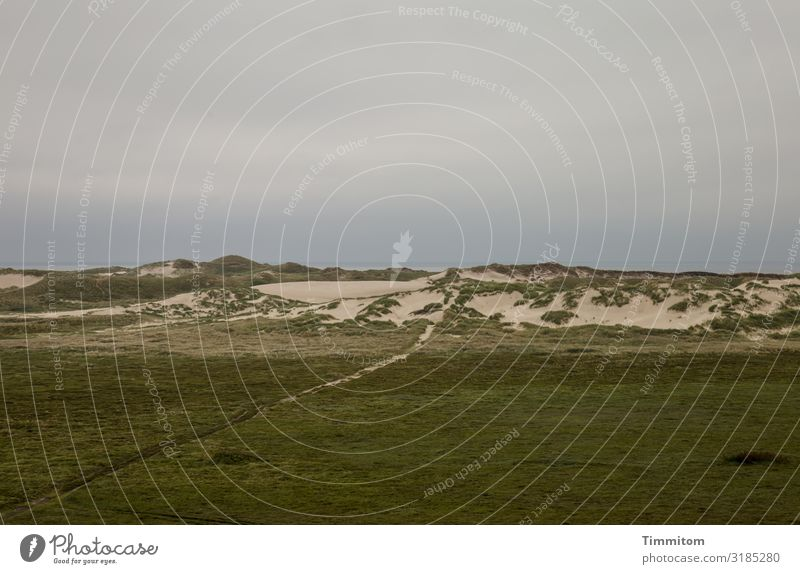 Way to the North Sea Vacation & Travel Environment Nature Landscape Plant Sky Clouds Weather Bad weather Dune Denmark Lanes & trails Dark Natural Brown Gray