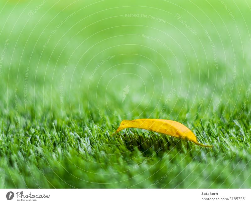 Yellow leaf on the artificial grass Relaxation Garden Nature Plant Autumn Tree Grass Leaf Meadow Field Plastic Green Colour Artificial Consistency light fall