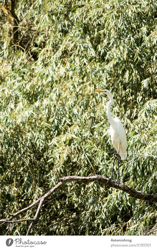 herons Environment Nature Landscape Plant Summer Tree Bushes Leaf Branch Forest River Danube Danube delta Romania Animal Bird Wing Beak Heron Neck Legs 1