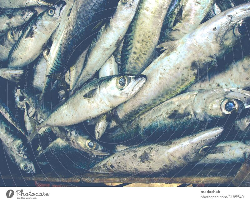 Big eyes Food Fish Seafood Nutrition Animal Farm animal Dead animal Scales Group of animals Herd Flock Pack Fresh Shopping Death Colour photo Subdued colour