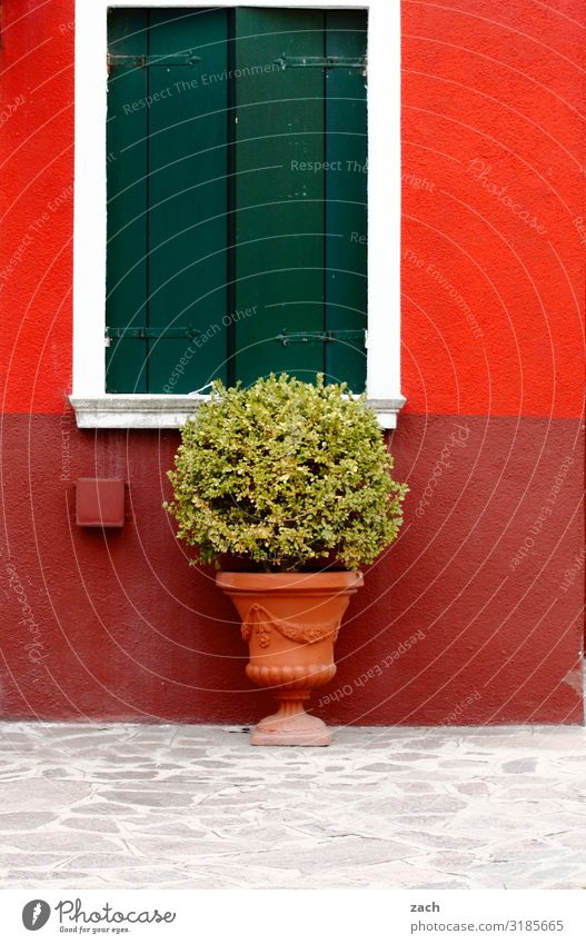 Plant Red House (Residential Structure) Window Wall (building) Wall (barrier) Facade Bushes Italy Village Downtown Venice Agricultural crop Shutter Pot plant