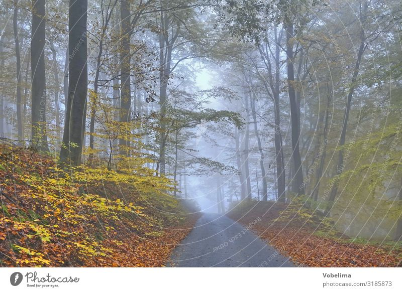 Fog in the autumn forest Tree Forest Blue Brown Green Black Calm spessart Colour photo Exterior shot Deserted Copy Space right Copy Space bottom Day