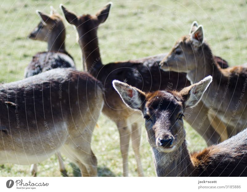 view of deer Natural Meadow Wild animal Stand Group of animals Beautiful weather Observe Animal face Roe deer Franconia