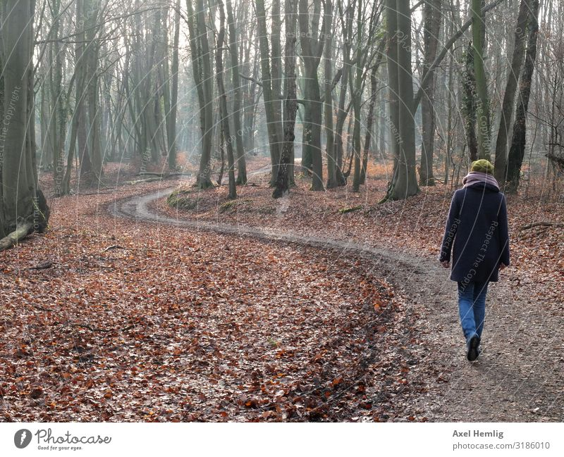 Winter walk along the Ankerbach Human being Feminine Woman Adults 1 Landscape Beautiful weather Forest Pedestrian forest path Coat Scarf Relaxation Freeze Going