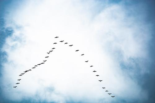 Sky Vacation & Travel Nature Blue White Animal Far-off places Black Autumn Spring Movement Bird Flying Hiking Free Communicate