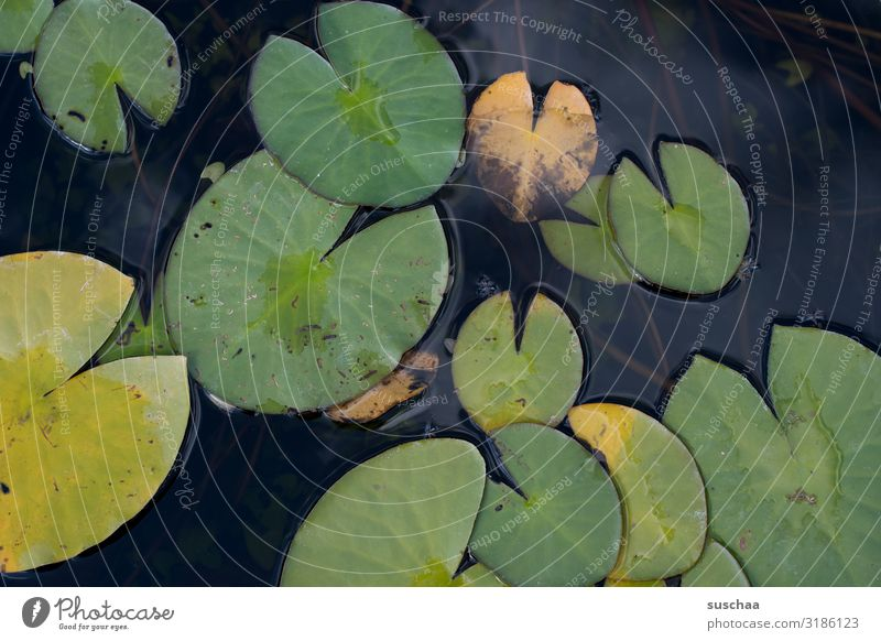 floating leaves water lily Leaf Pond Botanical gardens Karlsruhe Body of water Water Lake Plant Aquatic plant Nature Botany Environment Science & Research Round