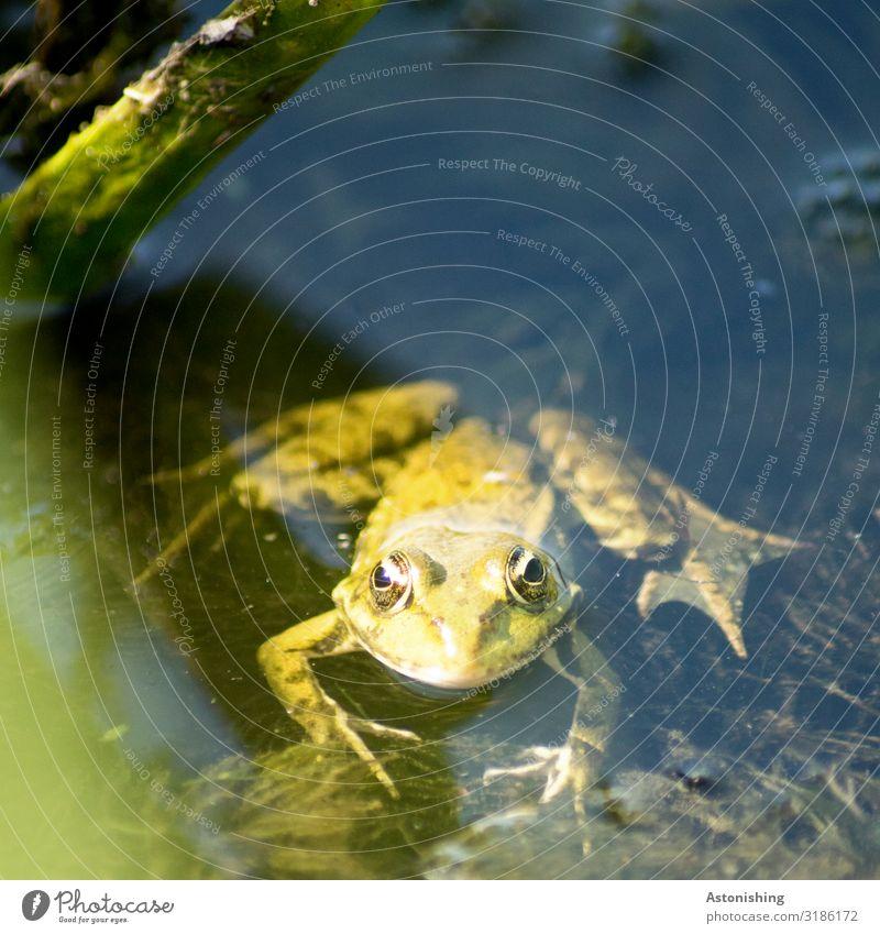 Nature Summer Plant Green Water Landscape Animal Black Environment Eyes Legs Lake Swimming & Bathing Wild animal Wet River
