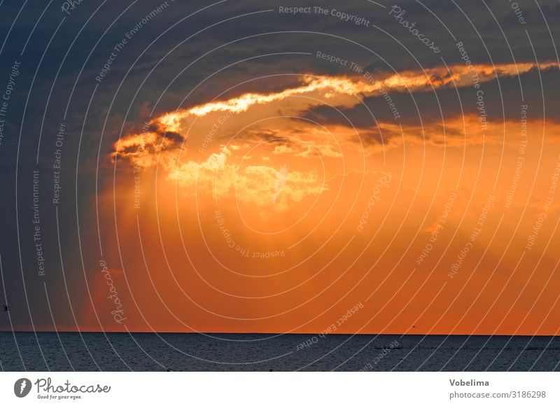 Evening sky at the North Sea Landscape Sky Clouds Sunrise Sunset Weather Coast Ocean Yellow Gold Orange Pink Red Black Colour photo Exterior shot