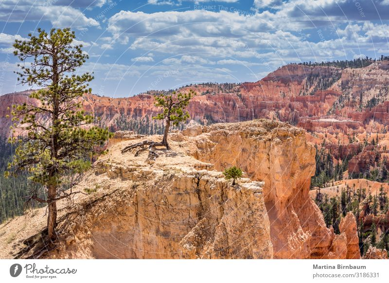 Scenice view with trees, Bryce Canyon Utah USA Vacation & Travel Mountain Nature Landscape Sky Tree Park Rock Monument Stone Gold Red Serene bryce point