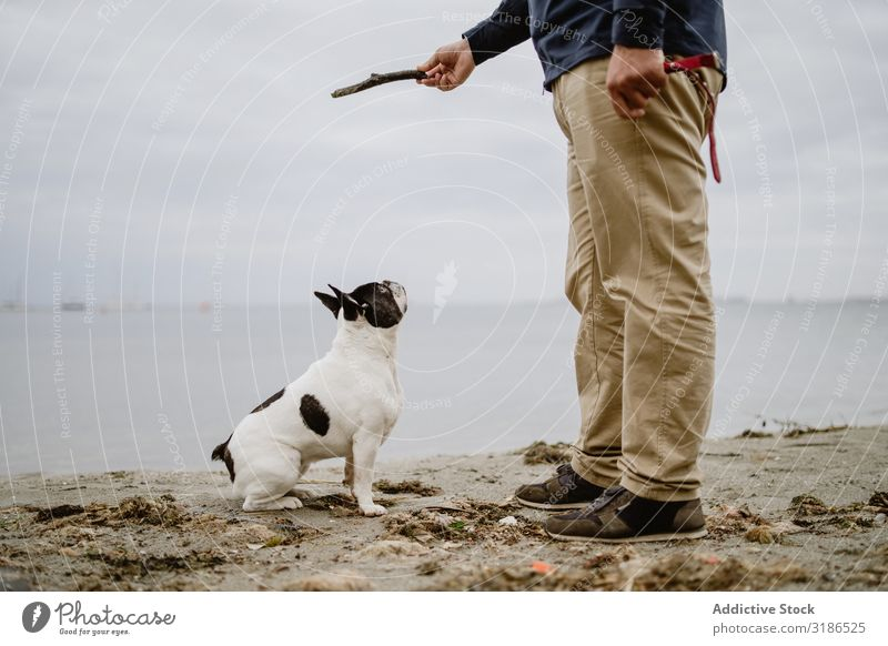 Crop man playing with dog on beach Man Dog Beach Playing Stick Ocean Sand Stand Pet french bulldog owner Joy Animal Nature Water Friendship Purebred Guy