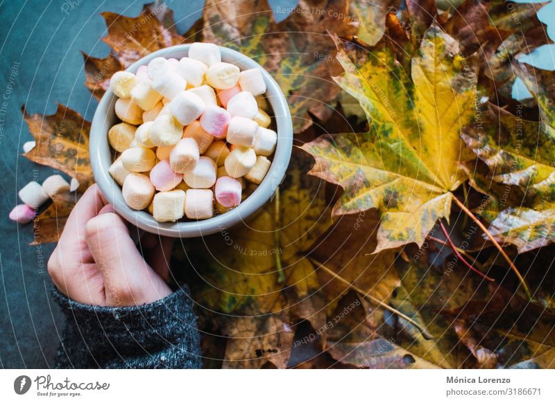 Woman holding a mug of hot chocolate with marshmallows. Beverage Coffee Tea Winter Table Autumn Warmth Leaf Concrete Wood Love Hot Brown Yellow Gray blogging