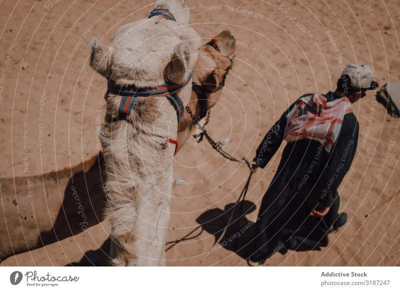 Arabs and camel near Great Pyramids Camel Desert Walking Cairo Egypt Giza Vacation & Travel
