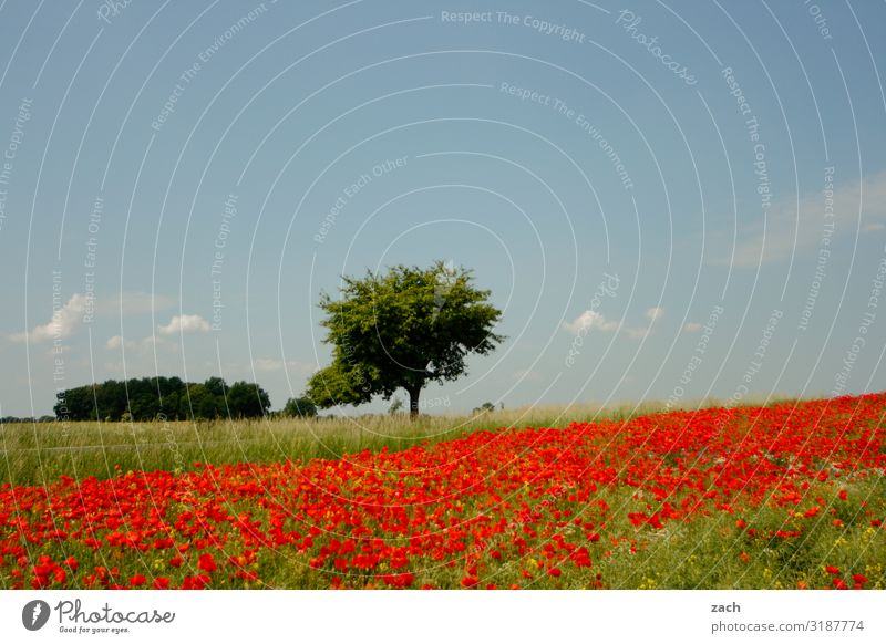 Sky Nature Summer Plant Blue Green Landscape Red Tree Flower Relaxation Environment Blossom Spring Meadow Grass