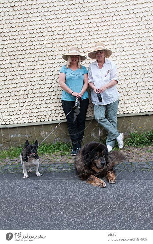 Caution sharp l or not? Animal Pet Dog Joy Happy Happiness Contentment Joie de vivre (Vitality) Dog lead Colour photo Exterior shot