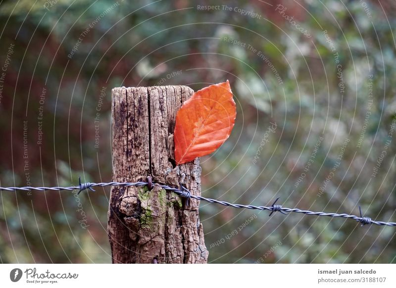 brown tree leaf on the barbed wire fence in autumn season Leaf Brown Loneliness Isolated (Position) Ground Nature Natural Exterior shot Neutral Background