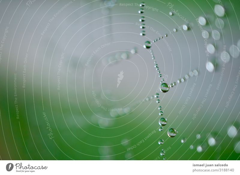 rain drops on the spider web in autumn Spider's web Internet Net Nature Rain Drop Bright Glittering Exterior shot Abstract Consistency Neutral Background Water