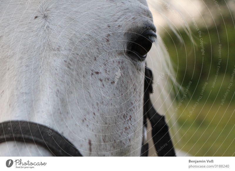horse portrait Animal Horse 1 Esthetic Elegant Friendliness Green Black White Self-confident Power Love of animals Loyalty Beautiful Peaceful Serene Calm