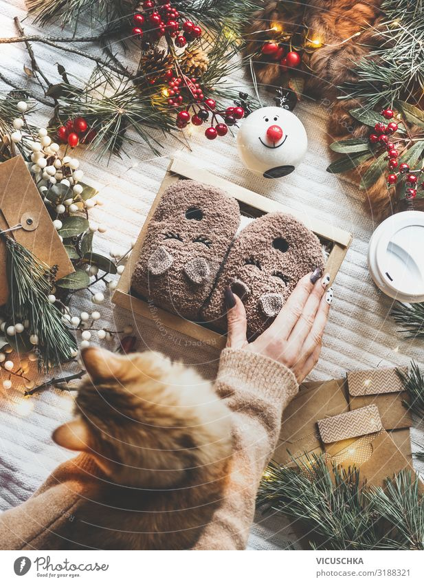 Cosy Christmas mood with cat and present Lifestyle Shopping Style Design Joy Winter Living or residing Feasts & Celebrations Christmas & Advent Human being