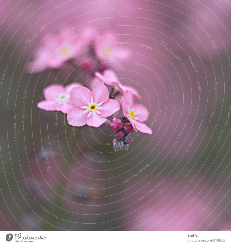 Nature Colour Plant Flower Spring Blossom Pink Birthday Blossoming Romance Desire Delicate Infatuation Memory Blossom leave Forget