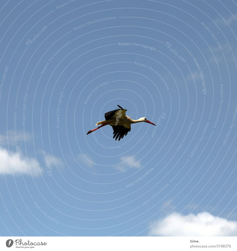 Looking For Adventure Nature Sky Clouds Beautiful weather Animal Wild animal Bird Stork 1 Observe Flying Self-confident Determination Life Endurance Curiosity