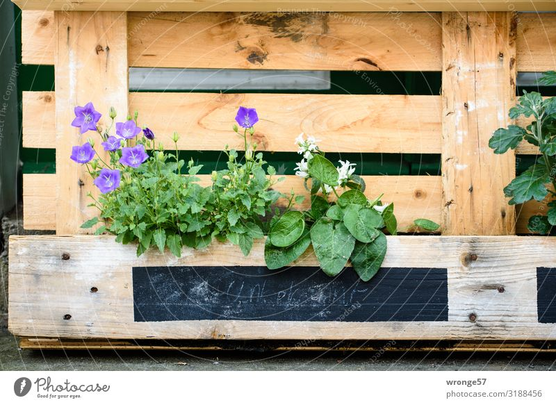 Alternative flowerbed pallet raised flowers Planting Summer Summerflower alternative unconventional Green thumb design Colour photo Exterior shot Day Deserted