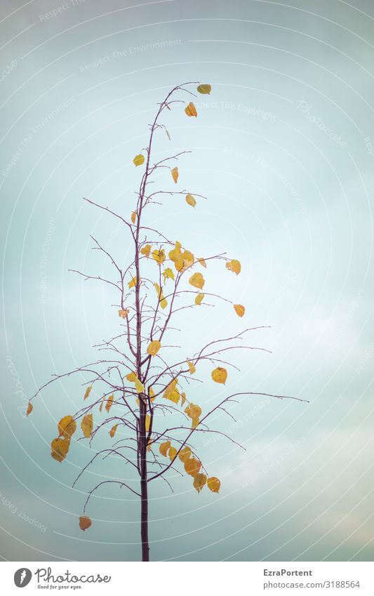 Sky Nature Plant Blue Tree Clouds Leaf Winter Autumn Yellow Environment Climate Minimalistic