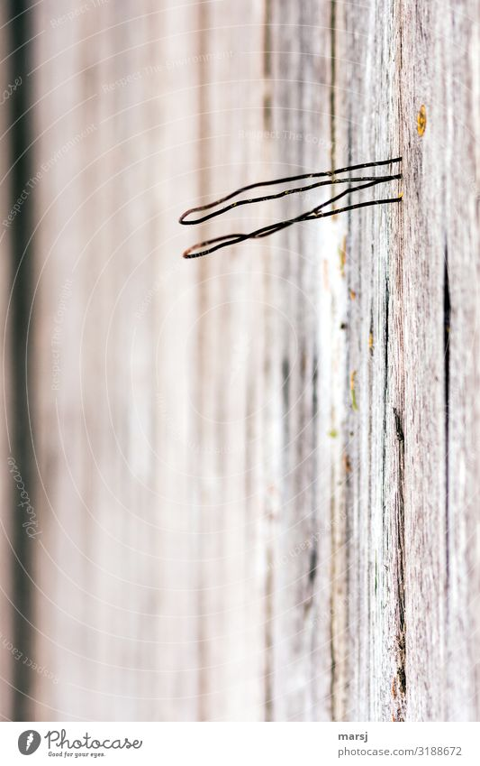 For whatever M-wire on wooden wall Wire Wood grain Thin Authentic Curved Whimsical Futile Useless Colour photo Subdued colour Macro (Extreme close-up) Abstract