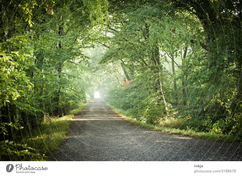 running forest Environment Nature Landscape Spring Summer Beautiful weather Tree Forest Germany Mixed forest Lanes & trails Footpath Fresh Bright Natural Green