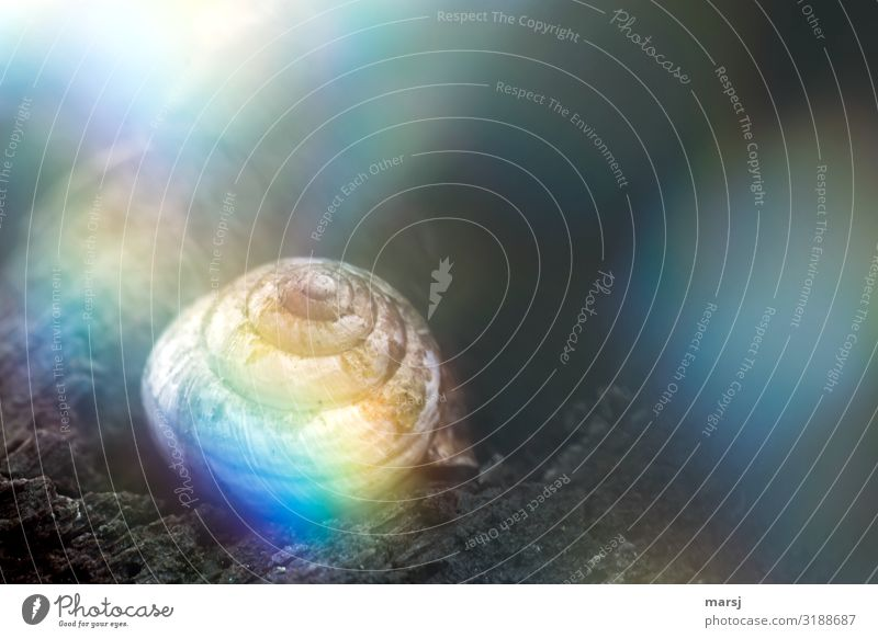 Casa Rainbow Animal Snail Snail shell 1 Spiral Illuminate Exceptional Dark Uniqueness Small Multicoloured Perturbed Loneliness Strange Whimsical Phenomenon